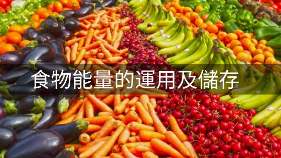 食物能量的運用及儲存